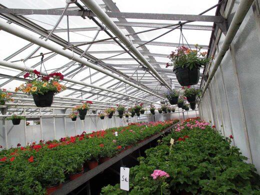 Les plantes à l'intérieur des serres