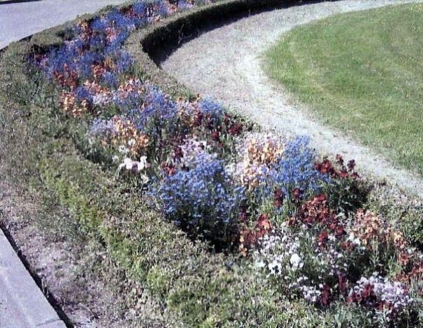 Les parterres de fleurs du Château d'Arnouville