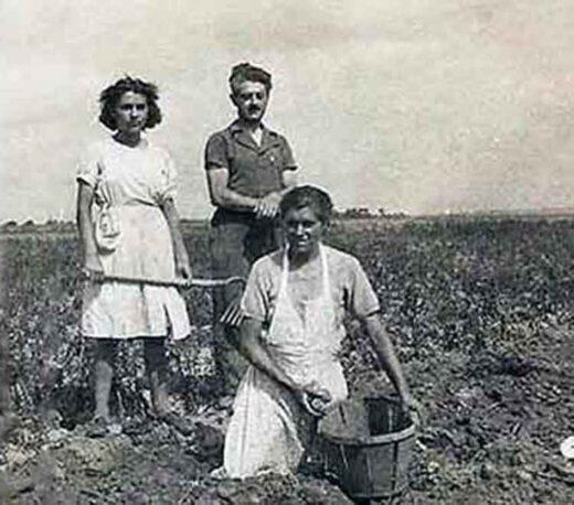 Arnouville : Les Moissons des Pommes de Terre