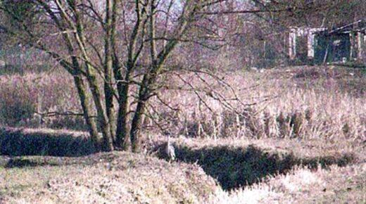 Ferme Lemoine, le long de la rivière Le Croult, un Héron