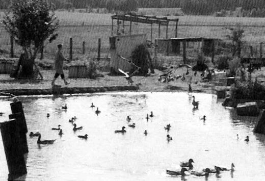 La mare aux canards à la ferme Lemoine