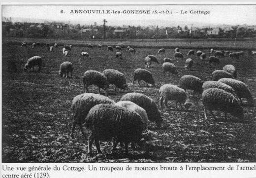 Des moutons au Cottage à Arnouville