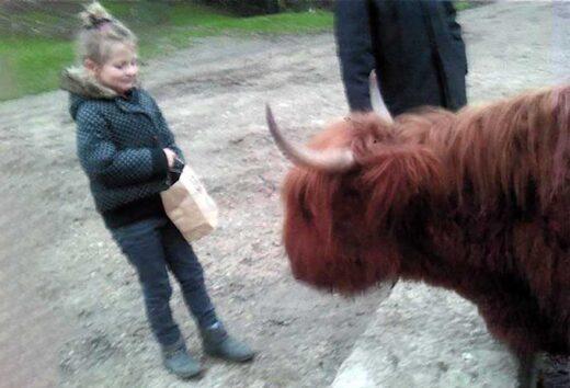La nouvelle vache de la Ferme, Cadeau de Noël