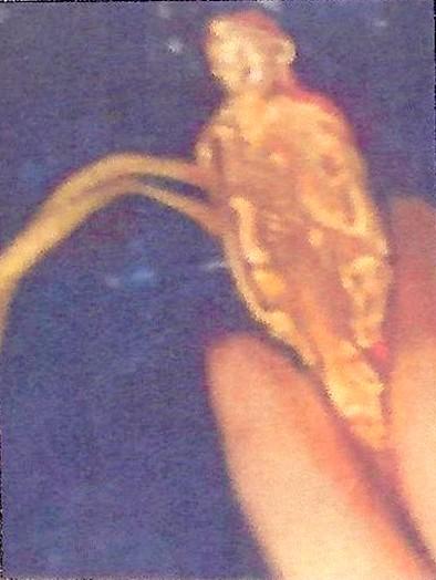 Sautoir du bijou de Valentine Thomas-Ropiquer