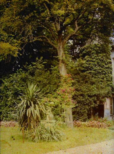 Une végétation luxuriante du parc du peintre Loyeux