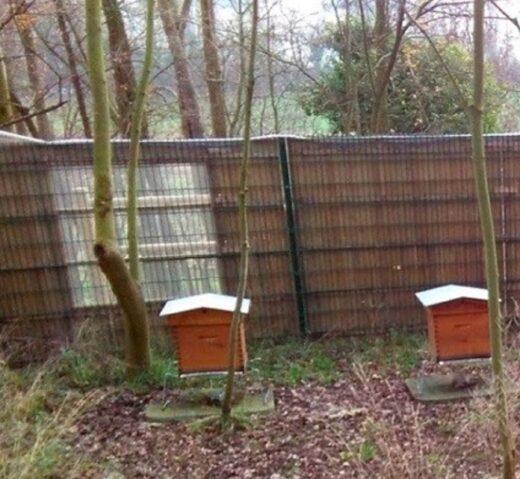 Deux ruches à l'intérieur de l'enclos