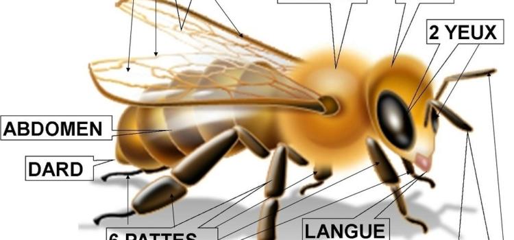 Le rucher de Bois des Condos