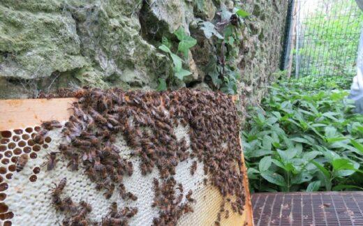 Le cadre miel des abeilles