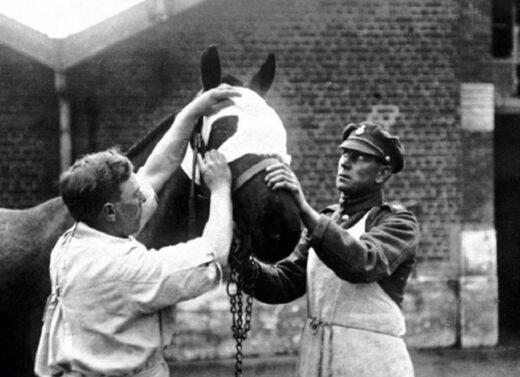 Le vétérinaire ôte un éclat d'obus.