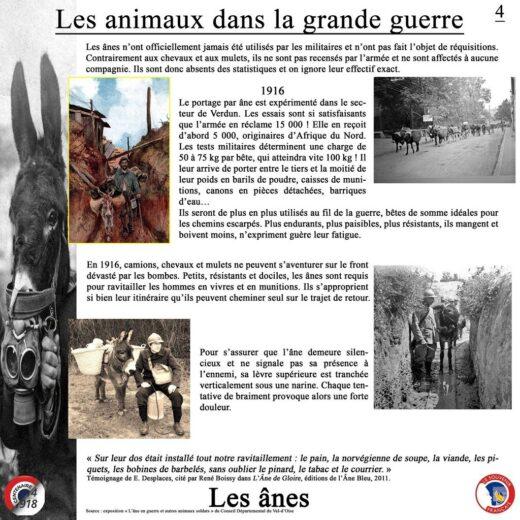 Les ânes aussi ont participé à la guerre.