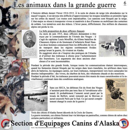 Les chiens de l'Alaska.