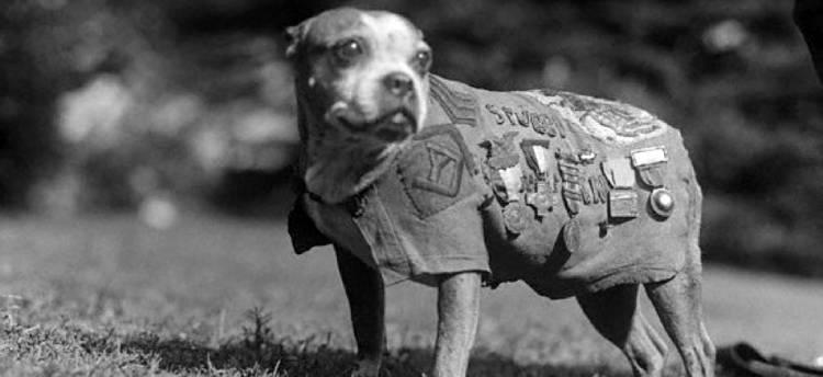 Featured Stubby - Les animaux de la Grande Guerre