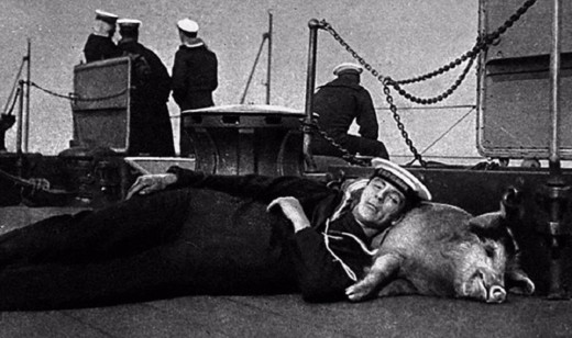 Un cochon sert d'oreiller à ce soldat.