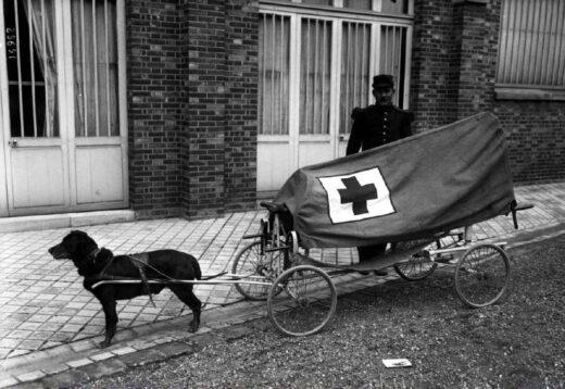 Un chien va vite secourir un blessé.